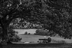 Once, in Surrey Hills... (@petra) Tags: petra monochrome blackandwhite surreyhills landscape tree bench people enjoyingthescenery wonderfulplace travel nikond600 outdoors revisited
