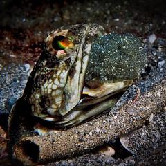 #PADI #scuba #diving #sport #active #awesome #underwater #LSD #SimplyBeautiful #DiveSaintLucia #moray #ray #eel #turtle #lionfish #StLucia #London #LSDscuba #cool #ocean #boat #underwater #pufferfish #octopus #seahorse #jawfish #wreck #dive (lsdscuba) Tags: ifttt instagram scuba lsd
