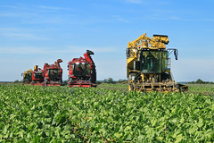 Sugar Beet Campaign 2016 | ROPA // HOLMER // GRIMME (martin_king.photo) Tags: sugarbeetcampaign2016 sugarbeet campaign 2016 ropa holmer grimme ropatiger5rconcept ropatiger5 holmerexxactterradost430 holmerexxact holmerterrados holmerexxactterradost440 holmert440 grimmerexor620 grimmerexor ropaeurotiger tschechische republik weather powerfull martin king photo agriculture machinery machines huge big strong machine modernagriculture agricultural yellow green fields beast beastmachine sky clouds sunnyday sun autumn warmweather greatday great czechrepublic dagros