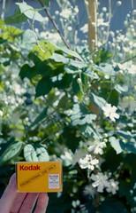 Kodacolor 200 (Trixi Skywalker) Tags: expired film canon av1 50mm 18 stockholm sweden sverige overgrown plant kodak gold 200 kodacolor