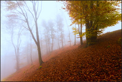 Magical Forest (beppeverge) Tags: autumn trees leaves foglie alberi woods fav20 magical forests magico valsesia fav10 magicallight montetovo