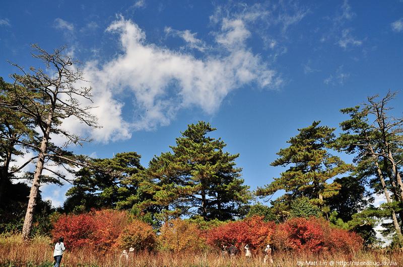 福壽山農場楓紅-46