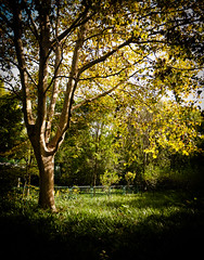 (Away Chen) Tags: china tree nikon shanghai away   chen   1755f28 nikond80  panoramafotogrfico 2012