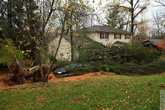 Good Trees (wmliu) Tags: new trees storm us sandy hurricane nj jersey tropical downed wmliu