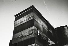 Enigmatic Plant (Yves Roy) Tags: street leica city shadow urban blackandwhite bw black contrast dark austria blackwhite raw moody darkness noiretblanc snap fav20 m8 gloom 40mm fav30 yr enigmatic fav10 mrokkor40mm blackwhitephotos yvesroy yrphotography