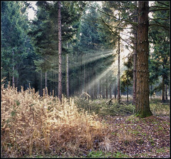 Inspiration (Bert Kaufmann) Tags: park autumn inspiration holland nature netherlands forest herbst herfst nederland boom autumnleaves autumncolours autumncolors nl bos wald arbre paysbas baum hdr sunray drenthe herfstkleuren spier ruinen niederlande inspiratie natuurmonumenten zonnestraal natuurgebied zonnestralen staatsbosbeheer dwingelderveld dwingelo lhee nationaalparkdwingelderveld