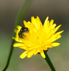 DSC_0016 (RUMTIME) Tags: flower nature queensland coochiemudlo