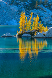 Backlit Alpine Larches at Crystal Lake in The Enchantments