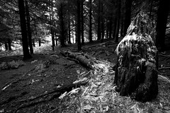1000 Trees (Ed Spence) Tags: wood trees green abandoned wales forest canon moss sigma 1020mm 60d