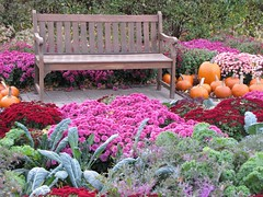 (Cher12861) Tags: flowers autumn fall nature beauty bench landscape pumpkins mums chrysanthemum wheatonillinois harvestdisplay cantignygardens october2012