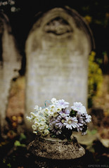 Purple I White I Plastic I Flowers (peterphotographic) Tags: city uk england london cemetery grave graveyard nikon dof britain f14 tomb tombstone sigma depthoffield plasticflowers eastlondon chingford 30mm chingfordmount chingfordmountcemetery d300s cam
