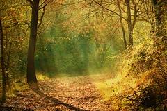 Un raggio di Sole nella boscaglia (paolo di sarra) Tags: blinkagain bestofblinkwinners blinksuperstars