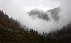 Dalla Bocchetta (Wrinzo) Tags: wood autumn italy mist alps fog forest italia piemonte alpen nebbia autunno alpi bosco foresta valgrande vald parconazionaledellavalgrande bocchettadivald