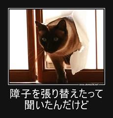 障子を張り替えたって聞いたんだけど #猫 #障子 (Demochi.Net) Tags: life cute sexy japan fun japanese motivator culture 日本 ペット 猫 demotivator 金 家族 結婚 ゲイ 女 子供 おっぱい 愛犬 政治 社会 巨乳 文化 眼鏡 教育 demotivators 経済 女性 初恋 r18 女子 カップル 子猫 女装 お笑い motivators 会社 少子化 企業 ユーモア 恋 悪い 格差 風刺 一言 デモチ 大喜利