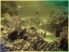 Dive at Boracay, Phil (LarrynJill) Tags: ocean travel sea fish coral asia underwater philippines dive diving boracay