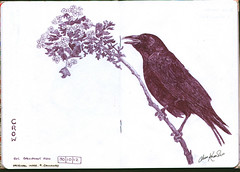 Crow (keepinsidethelines) Tags: original copyright black pen all image images r jess crow knowles 2012 ballpoint galloway sketchbookproject2013