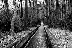 The long winter walk (Rebekka boo) Tags: blackandwhite black white tone trees ice winter linacre water stream chesterfield derbyshire countryside wood walk dayout morning snow ground country beautiful beauty bekboo boo branch branches bushes c143 bw contrast day daytime drive easyshare edit england finepix fun gb great greatoutdoors grey happy highlights hill interesting iphoto kodakeasyshare kodakeasysharec143 kodak landscape lines monochrome monotone monotones mothernature natural nature outdoors path place rebekkaboo rebekkabrown rebekka roadtrip shadow shadows stone texture tones tree trip twigs view leaves