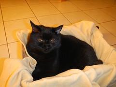 Cat in the box (Ottmar H.) Tags: cat chat gato katze macska  kater  tomcat