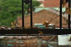 llovi bonito (Natalia mon) Tags: cali hojas casa lluvia gotas balcon
