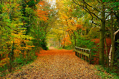 Autumn on the Derwent Walk (Delboydino) Tags: autumngold thederwentwalk