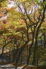 Street (peaceful-jp-scenery) Tags: autumn leaves leaf maple minolta  atami amount   plumpark powerzoom  dslra900 900 sony af35200mmxif4556