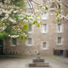 Each day bright and clear (Zeb Andrews) Tags: uk travel tree film analog mediumformat square scotland spring edinburgh europe bokeh blossoms hasselblad lighthearted hasselblad500c bluemooncamera