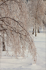 Winter Jewels (tehhyvredina) Tags: winter snow cold ice fourseasons icicle icyrain winterbeauty autofocus     canonef100mmf28macrousm  canoneos50d  mygearandme
