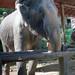 2012-11-22 Thailand Day 04, Maesa Elephant Camp