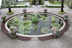 2016-05-31-3246 (tonykliemann) Tags: italy isolamadre giardinobotanico