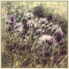meadow flowers (odinvadim) Tags: morning flowers painterly artist graphic textures textured iphone iphoneart iphoneography iphoneonly instapickskyart editmaster painterlymobileart