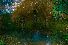 Mineral spring 02 (Milen Mladenov) Tags: old blue summer green nature water grass spring nikon mineral cracks 2016 mineralspring d3200 varbovchets