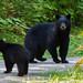 Bear Time 02