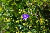 fleur 1 (mathieu_veron) Tags: fleur campanule