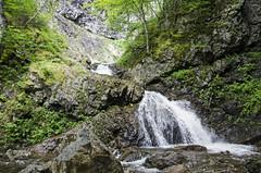 At the Falls DSL9314 (iloleo) Tags: waterfall uisgebnfallsprovincialpark scenic summer landscape novascotia capebreton nikond7000 nature