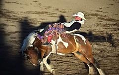 8 Second Ride (ed.mortensen) Tags: cowboy bronc horse bucking rodeo