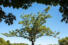 "Albero ""in cornice"" a Friburgo (Maria Foti) Tags: germania germany deutschland places friburgo tree nature"