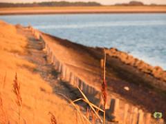 Chemin au bord de l'Escaut oriental (Ath Salem) Tags: zierikzee zeeland zelande pays bas nederland netherlands promenade mer zee quai escaut oriental cote littoral