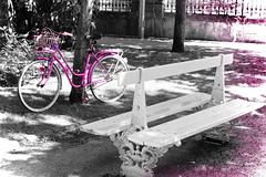 Elige-1 (KARNATION) Tags: karnation pink rosa bike bicicleta banco bench parque park