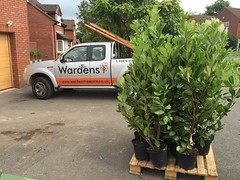 "Delivery of 1.2m laurels to plant a new hedge line for today's customer. #wardenstreecare <a style=""margin-left:10px; font-size:0.8em;"" href=""http://www.flickr.com/photos/137723818@N08/29518446020/"" target=""_blank"">@flickr</a>"
