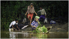 Family Cleaning Fish and a Traditional Papyrus Boat on Lake Tana (Luc V. de Zeeuw) Tags: boat child cleaning ethiopia fish lake laketana man papyrus rowing woman bahirdar amhara
