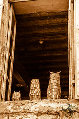 chouette (Thierry Poupon) Tags: bois chouette fentre hibou montolieu fentre owl wooden blackandwhite sepia noiretblanc