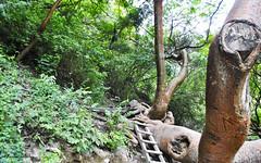 Corriendo por la jungla... (spawn5555) Tags: tolantongo hidalgo mxico paisaje naturaleza natural nature nikon exploracin d3000 photography fotografia