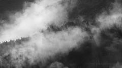 Hillside Forest Cloud (Old-Man-George) Tags: 2016 geiranger georgewheelhouse landscape norge norway scandinavia travel trees wwwgeorgewheelhousecom mist fog pine forest woods cloud blackwhite d884408