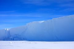 skua flying along the berg (jzielcke) Tags: world voyage travel sea bird ice berg island ross high reisen tour antarctica unterwegs iceberg polar monde eis latitude reise welt eisberg antrtida skua antarktis antarctique
