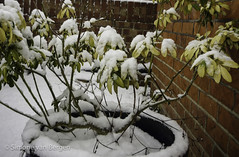 "Little shrub with snow • <a style=""font-size:0.8em;"" href=""http://www.flickr.com/photos/44019124@N04/8277289105/"" target=""_blank"">View on Flickr</a>"