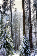 Postcard Perfect.. (scrapping61) Tags: california winter snow nature forest yosemitenationalpark legacy vangogh orton 2012 tistheseason masterclass swp artphotography vividimagination rockpaper artdigital greenscene scrapping61 sharingart awardtree bestgallery naturelive tisexcellence digitalmasterpiece covertpainters visionquality daarklands legacyexcellence trolledproud trollieexcellence exoticimage pinnaclephotography poeexcellence rockpaperexcellence digitalartscene masterclassexhibition admintalk netartii masterclasselite portfolioartscape arttaate