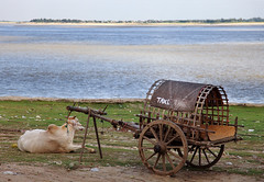 Public Transport (AnyMotion) Tags: travel nature animal animals river landscape tiere reisen southeastasia burma taxi natur ox myanmar publictransport ufer fluss landschaft birma banks 2012 irrawaddy oxcart mingun anymotion ochsenkarren landschaftsaufnahmen canoneos5dmarkii 5d2