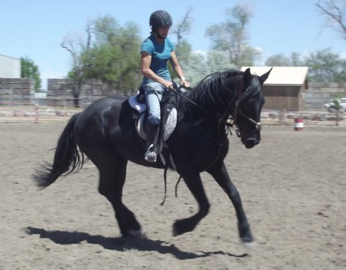 Galad 2 yrs 9 mos canter 1