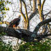 "Fish Eagle in Zambia • <a style=""font-size:0.8em;"" href=""https://www.flickr.com/photos/21540187@N07/8293294635/"" target=""_blank"">View on Flickr</a>"