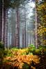 Stapleford Woods (doodledash) Tags: trees forest nikon bracken rockpaper abigfave flickraward d300s nikonflickraward daarklands flickraward5 flickrawardgallery rockpaperexcellence